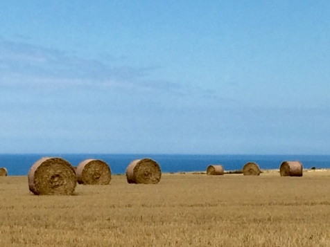 Les champs bordant les falaises