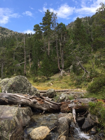 Forêts du massif