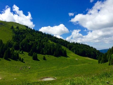 Les alpages verdoyants du Jura