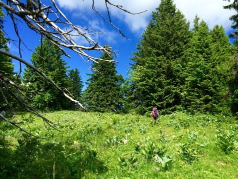 Les forêts verdoyantes