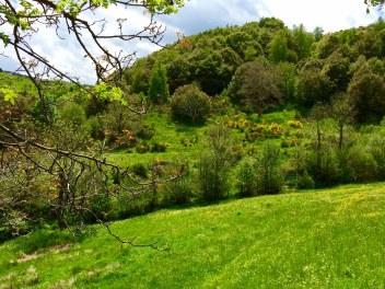 Les paysages de la Margeride