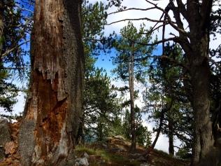 En forêt peu après le départ depuis Gortsia