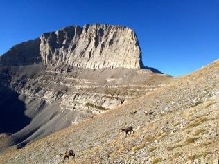 La dent du Mont Olympe et ses chamois au premier plan