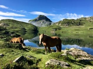 Les chevaux en liberté au lac Gentau